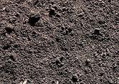 Cotton Burr Compost.jpg