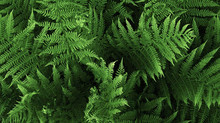 Plantas não toxicas perfeitas para seus animais de estimação