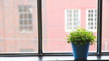 Como perceber quando suas plantas precisam de manutenção?