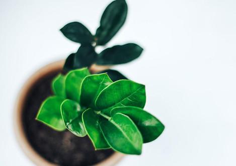 Que especies de plantas posso colocar dentro de casa ou no meu apartamento?