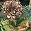 Thumbnail: Single Bloom + Aspen Vase