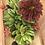 Thumbnail: Succulents Boat