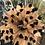 Thumbnail: 4-Bloom Vase Plug