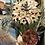 Thumbnail: Aspen Vase Arrangement
