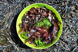 algues photo de pres.jpg