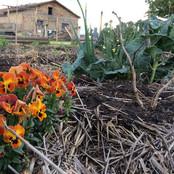 Agricoltura e Agroecologia