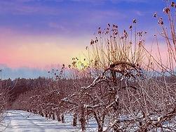 alberi-di-frutta-1.jpg