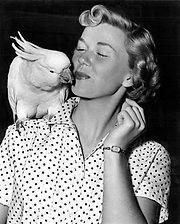 Célébrités avec perroquet - Robert Blake