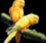 Perroquets éteints