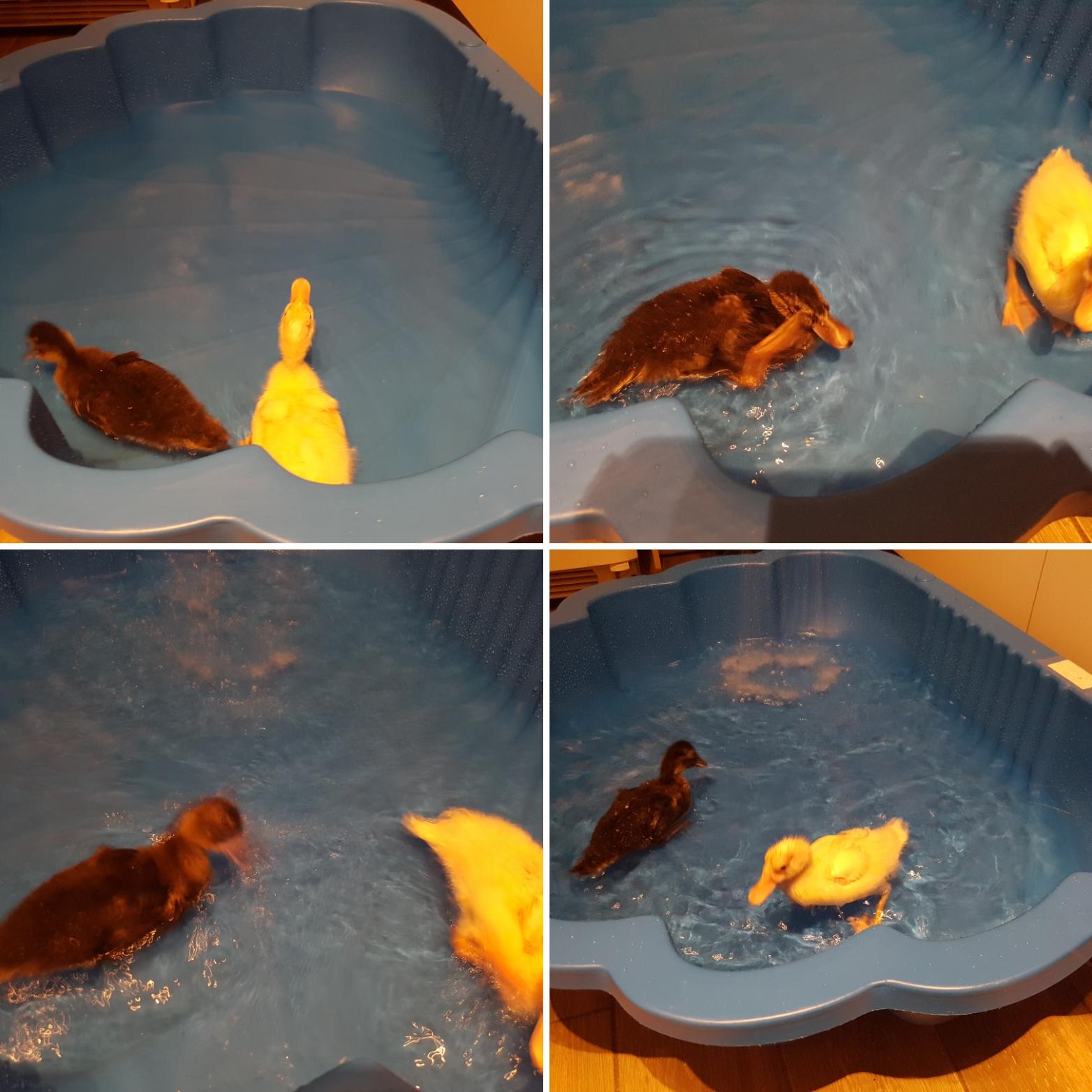 Sauvetage d'animaux