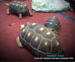 Salon des animaux de l'UQAC 3ième