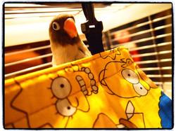 Les perroquets dans la vie