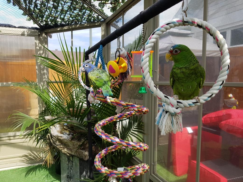 La volière extérieur à perroquets