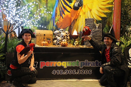 Les Propriétaires Perroquet Pirate