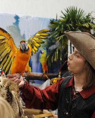 Anniversaire de mariage Perroquet Pirate