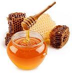 Miel Aliments toxiques pour les perroquets