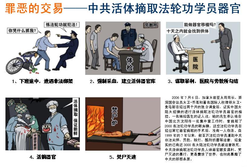 图文传单:罪恶的交易——中共活体摘取法轮功学员器官(明慧网)