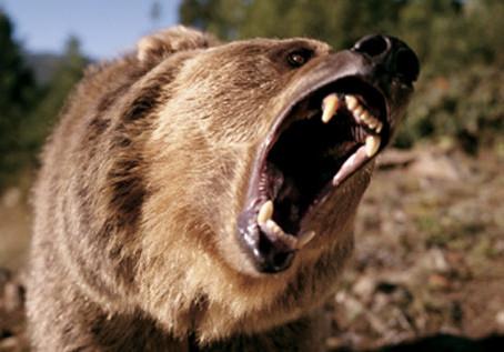 """""""Slow Burn Bear"""""""