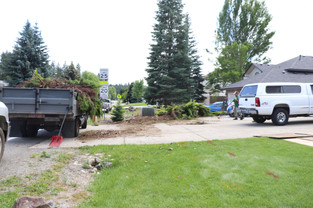 Junipers filled the dump truck