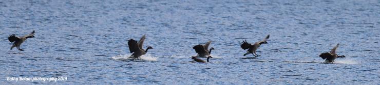 2019-12-08-Farragut eagles-0551a waterma