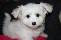 available coton gracie 11