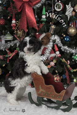 2016-10-28 Mikie-Razeberrie Cream male Wilson 2