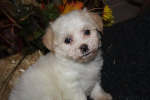 available born 9-20-11 female Maggie  001