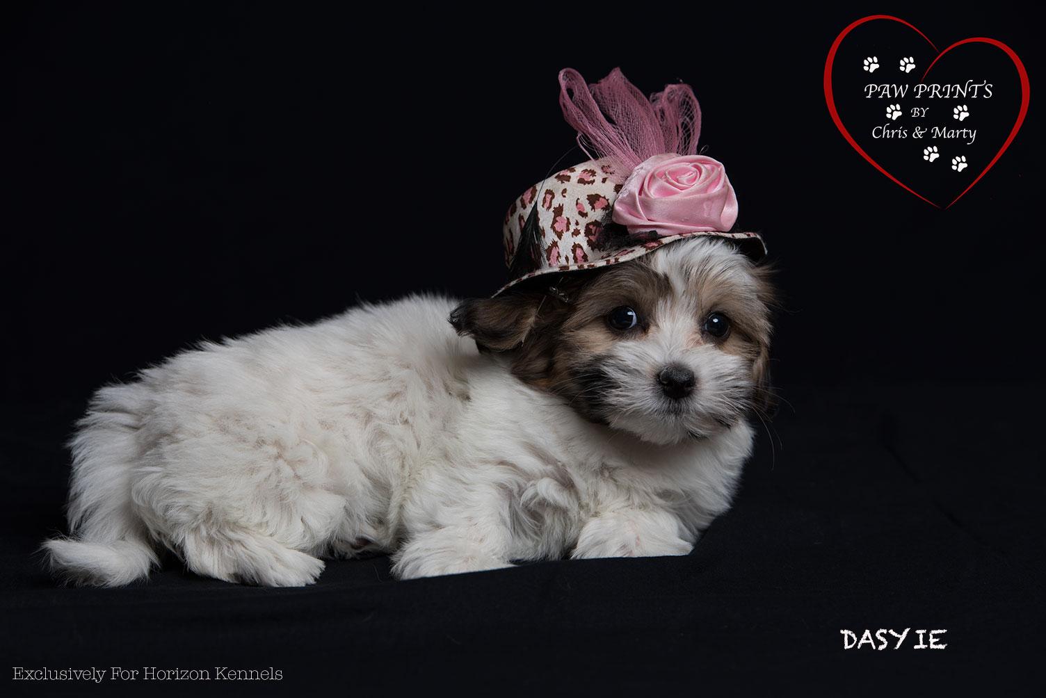 2015-04-12 ms lipps-samson Dasyie female 2