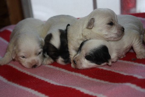 available coton born 1-9-12 all  001