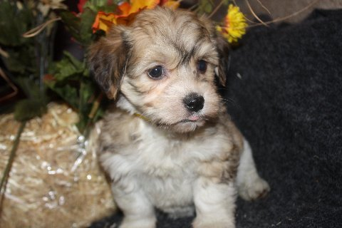available born 9-20-11 female no name  003