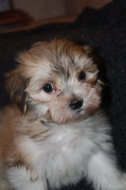 available born 9-15-11 male Tiny Tim 003