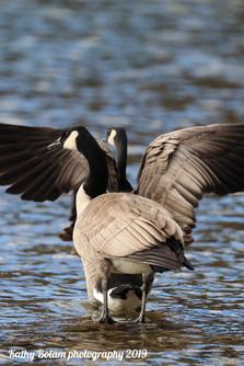 2019-12-08-Farragut eagles-0178 watermar
