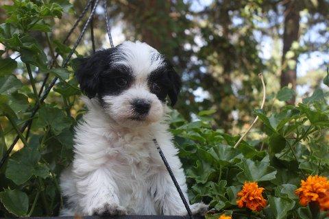available born 7-1-11 Riley 005