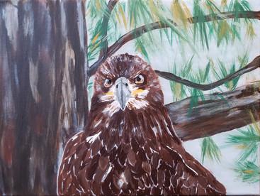 Painting of eagle photo I took