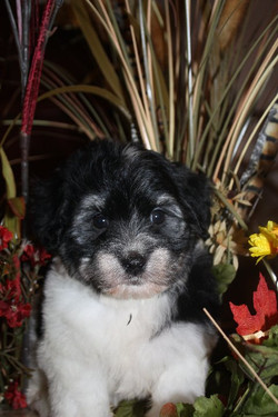 available born 9-20-11 male Checkers  002