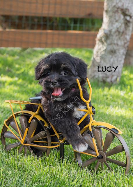 2016-04-29 lil ann-danny boy female Lucy 1a