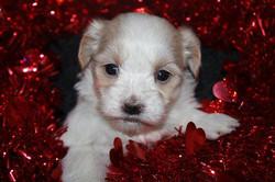 available born 12-07-11 female Carmel 001