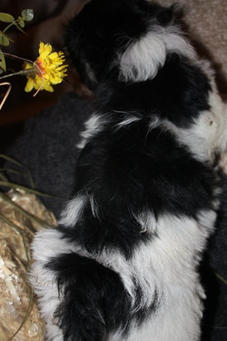 available born 9-22-11 male Trapper 003