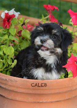 2016-04-29 lil ann-danny boy male Caleb 2a