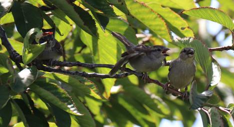 06 June - Gray Catbird