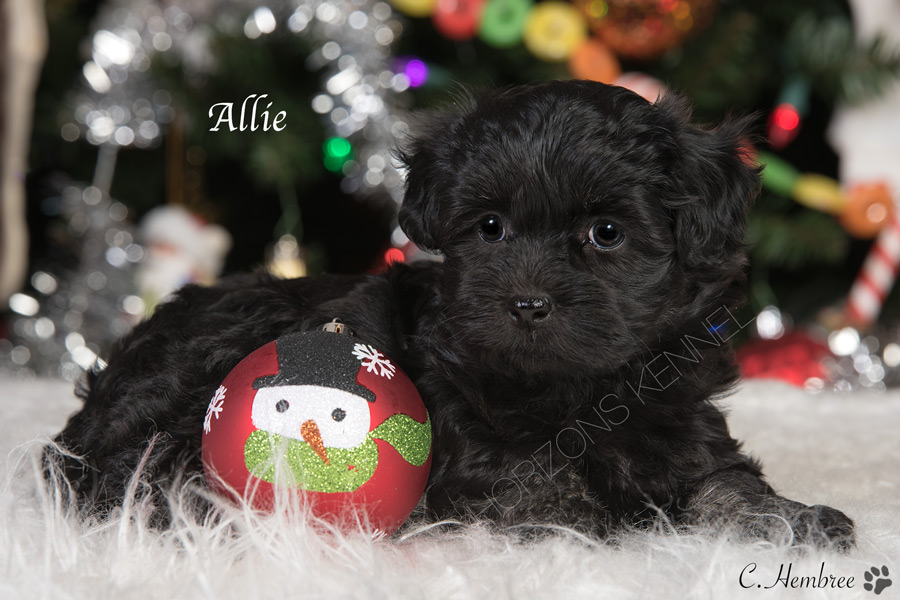 2016-10-10 elsa-pi female Allie 3