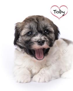 2015-12-30 ms lipps-pi male Toby 1