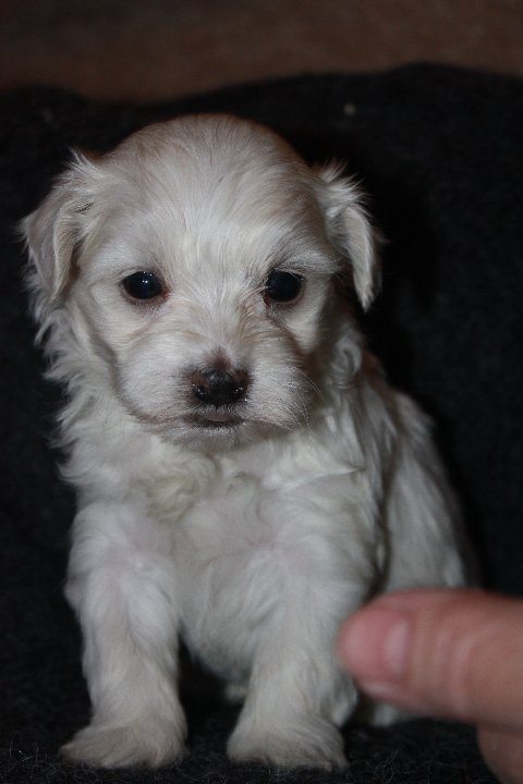 available born 12-07-11 male Dundee 001