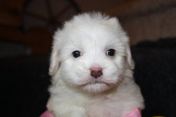available coton female 1