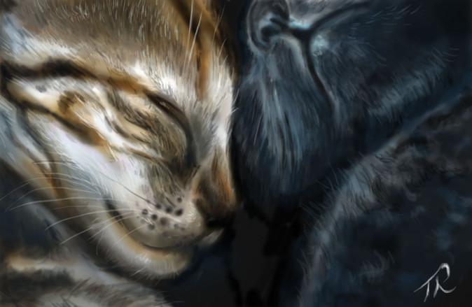 Kitten Cuddle