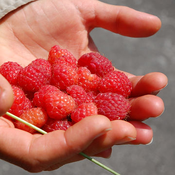 raspberry eco plus psyche.jpg