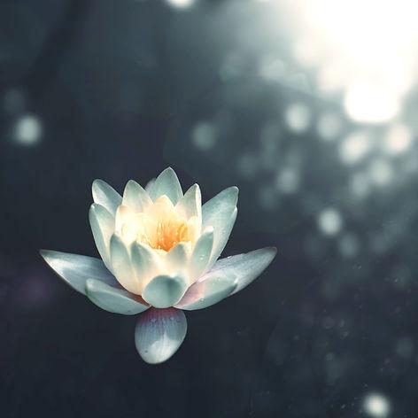 Lotus%20Flower_edited.jpg
