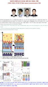 세포막-트랜지스터 센서로 세계 최고 민감도 구현
