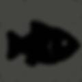 fish-512.png