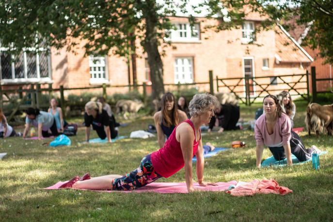 Goat Yoga-146.jpg